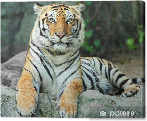 tiger on rock Canvas Print - Themes