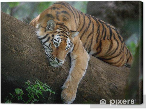 Tiger on tree Canvas Print - Themes