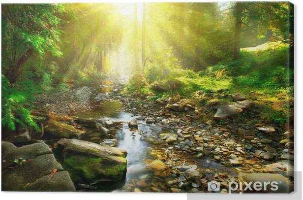Tranquil mountain river in a green forest Canvas Print - Themes