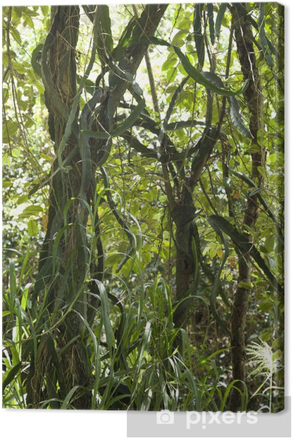 Tree with vines and grass. Canvas Print - Trees