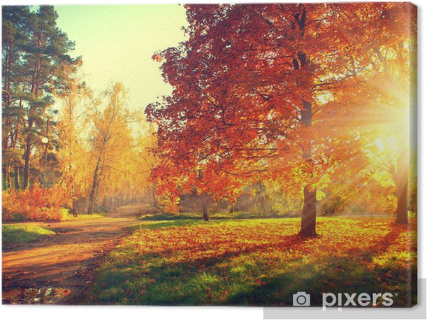 Trees in the autumn sun light Canvas Print - Themes