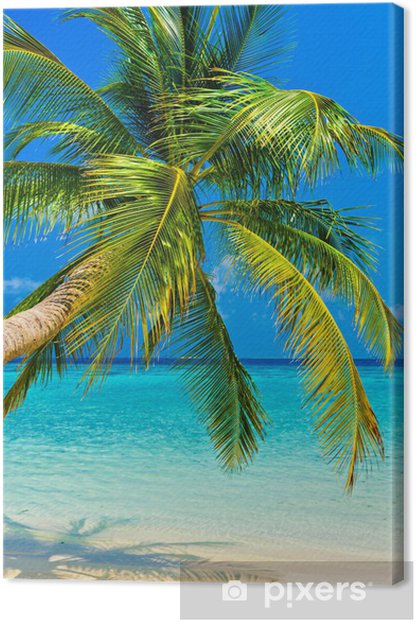 Tropical beach Canvas Print -