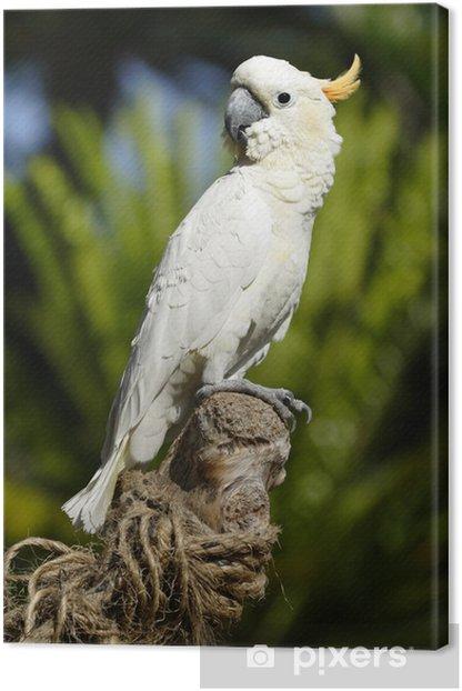 tropical bird series #3 Canvas Print - Birds