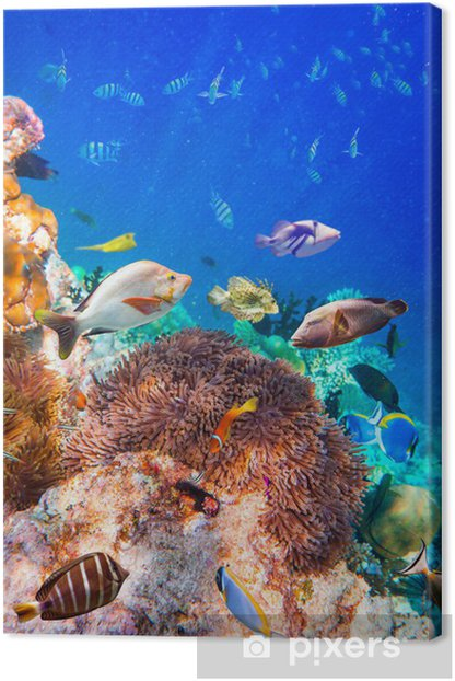 Tropical Coral Reef. Canvas Print - Coral reef
