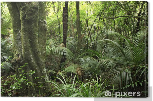 Tropical forest Canvas Print - Themes