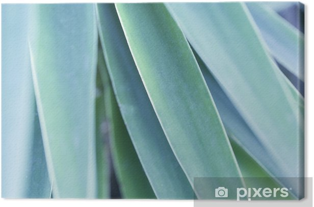 Tropical Green Leaf Canvas Print - Plants and Flowers