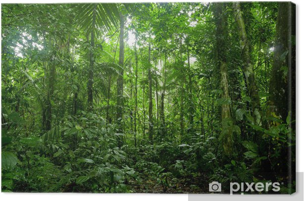 Tropical Rainforest Landscape, Amazon Canvas Print - Themes