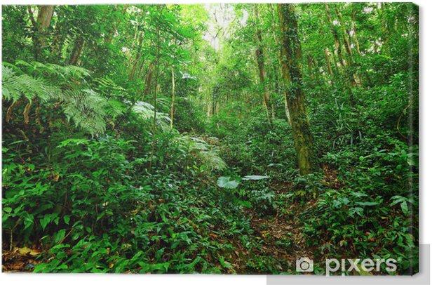 Tropical Rainforest Landscape Canvas Print - Themes