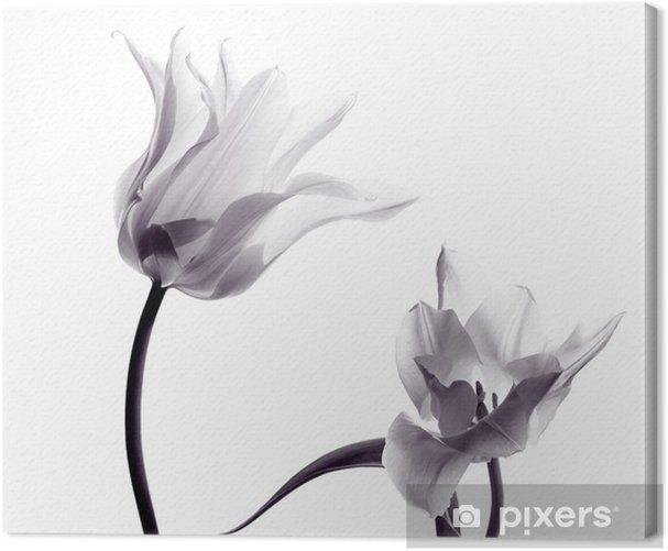 tulip silhouettes on white Canvas Print - Themes