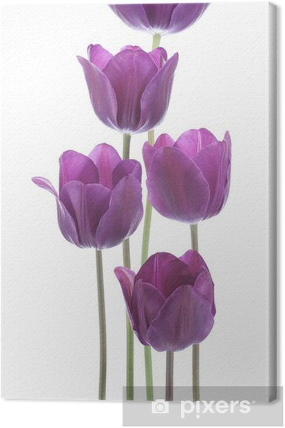 tulip Canvas Print - Wall decals