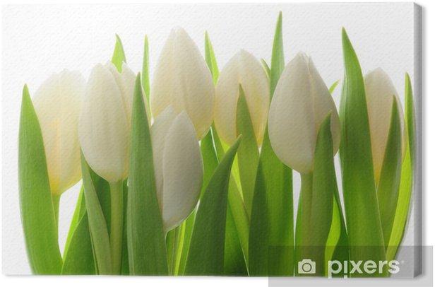 Tulips Canvas Print - Themes