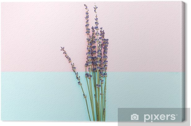 Twigs of lavender on a pink-blue background. Minimalism Canvas Print - Graphic Resources