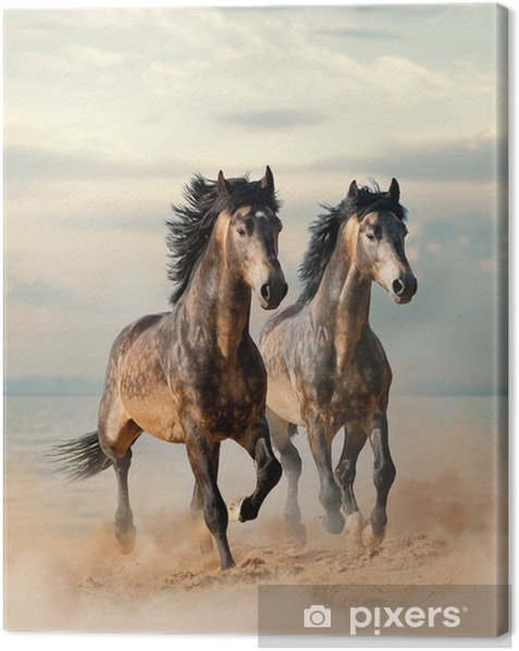 Two beautiful horses running by the sea Canvas Print - Animals