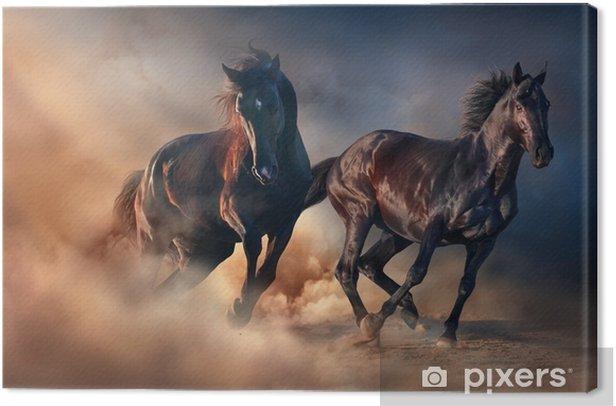 Two black stallion run at sunset in desert dust Canvas Print - Animals