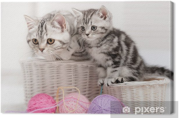Two cats in a basket with balls of yarn Canvas Print - Themes
