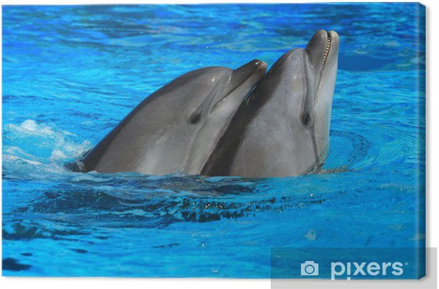 two dolphins Canvas Print - Themes
