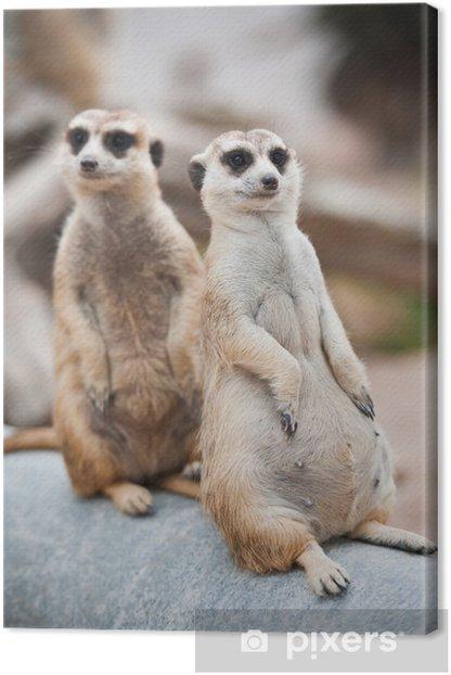 Two meerkats Canvas Print - Mammals