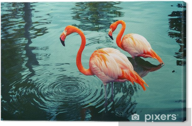 Two pink flamingos walking in the water with reflections Canvas Print - Animals