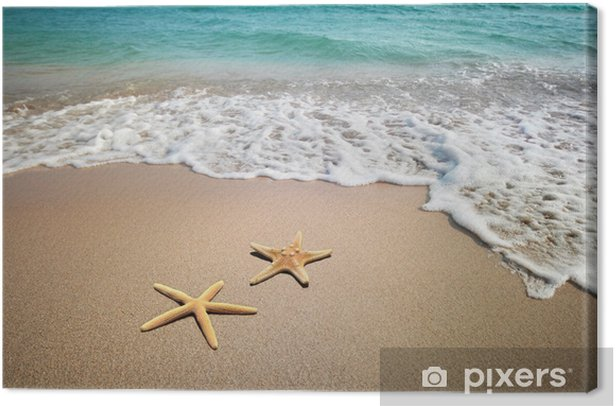 two starfish on a beach Canvas Print - Themes