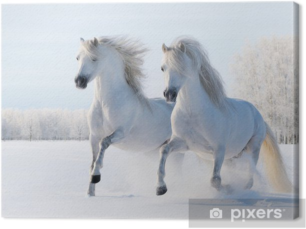 Two white horses gallop in the snow Canvas Print - Styles