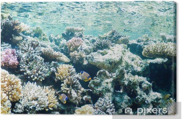 underwater landscape Canvas Print - Underwater