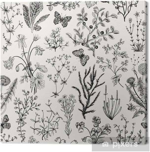 Vector vintage seamless floral pattern. Herbs and wild flowers. Botanical Illustration engraving style. Black and white. Canvas Print - Flowers
