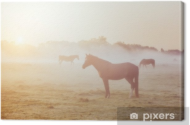 View of pasture with Arabian horse grazing in the sunlight. Beauty world. Soft filter. Warm toning effect. Canvas Print - Animals