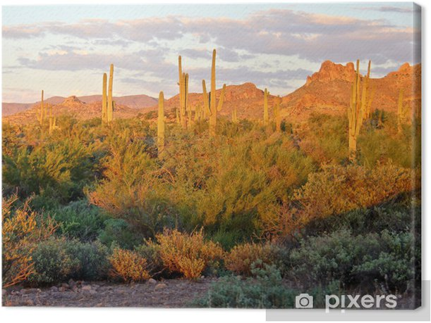 View of the Arizona desert near Phoenix at sunset Canvas Print