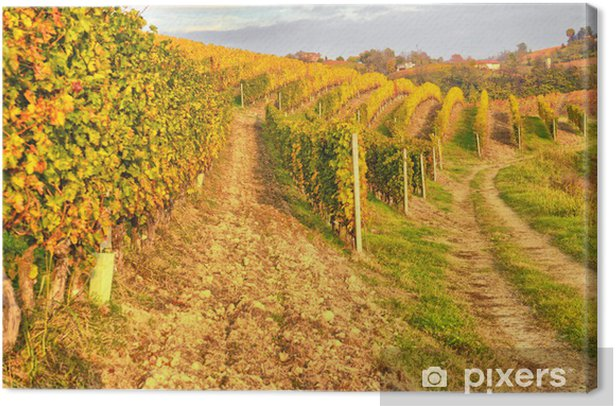 Vigna Canvas Print - Countryside