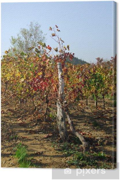 vigne ardèche Canvas Print - Plants