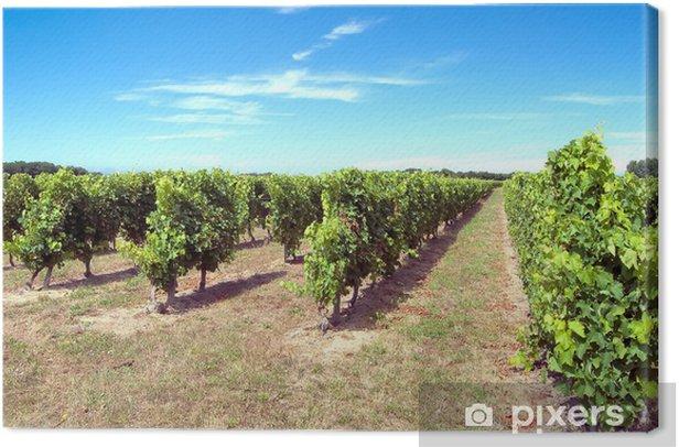 Vignes île d'Oléron Canvas Print - Plants