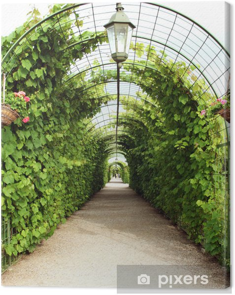 Vine arbor tunnel Canvas Print - iStaging