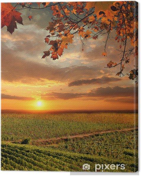 Vine landscape in Chianti, Italy Canvas Print - Themes