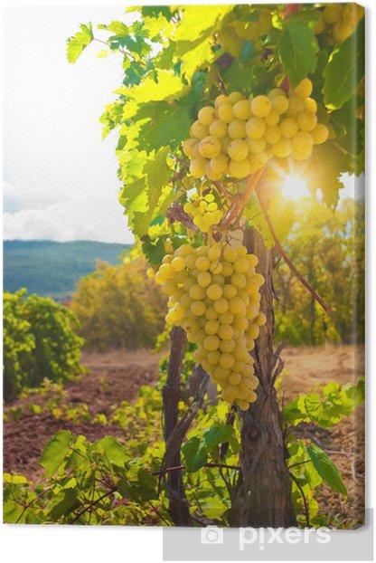 Vineyard Canvas Print -
