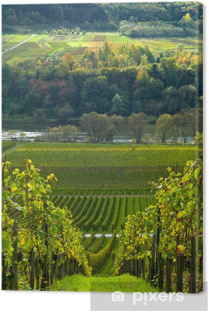 vineyards and forest Canvas Print - Destinations