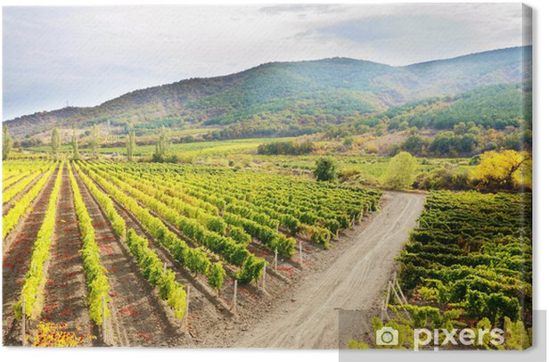 Vineyards Canvas Print - Agriculture