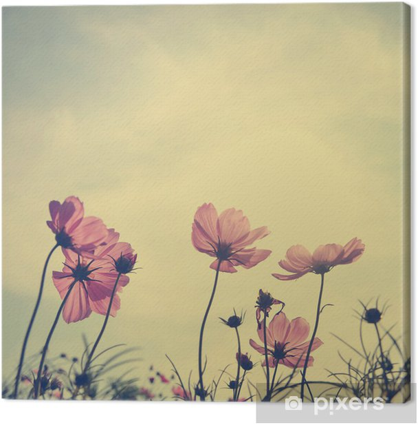 Vintage Cosmos flowers in sunset time Canvas Print - Styles