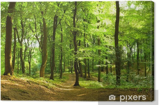Waldweg im Sommer Canvas Print - Destinations