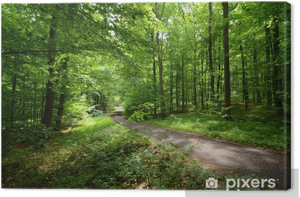 Waldweg im Sommer Canvas Print - Outdoor Sports