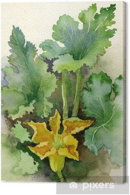 Watercolor Flora Collection: Zucchini Flower Canvas Print - Art and Creation