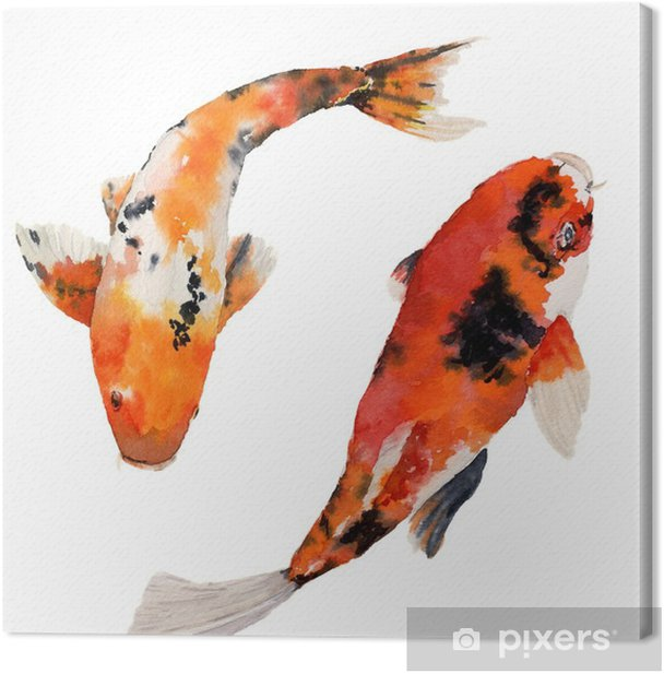 Watercolor oriental rainbow carp set. Koi fishes isolated on white background. Underwater illustration for design, background or fabric Canvas Print - Animals