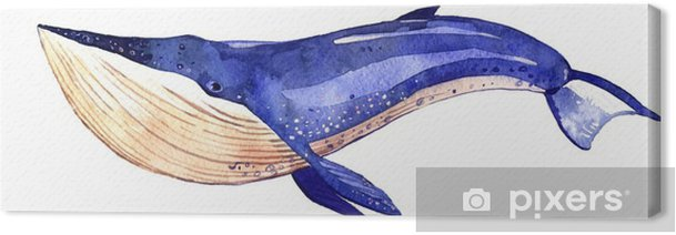 watercolor whale, hand painted illustration isolated on white background Canvas Print - Animals