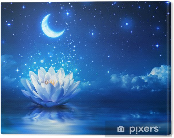 waterlily and moon in starry night - magic background Canvas Print - Destinations