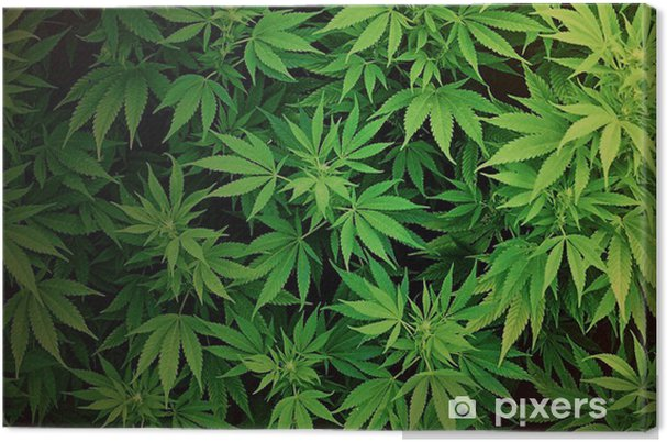 Weed WallPaper Canvas Print