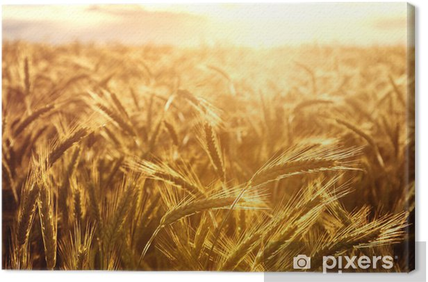 Wheat crops towards the setting sun Canvas Print - Themes