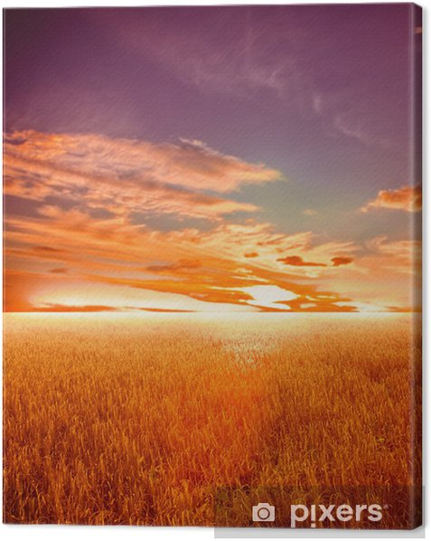 wheat field at the sunset Canvas Print - Themes