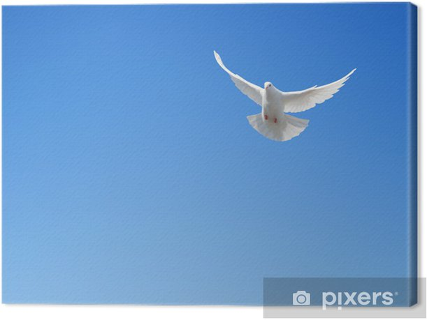 White dove flying in the sky Canvas Print - Birds