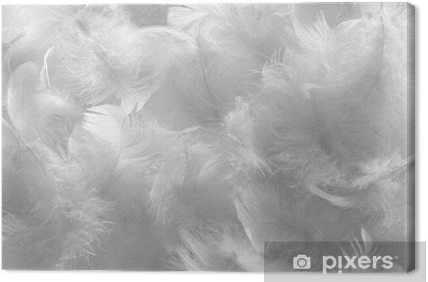 White feathers Canvas Print - Themes
