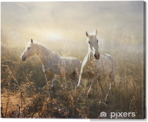 white horse galloping on meadow Canvas Print -
