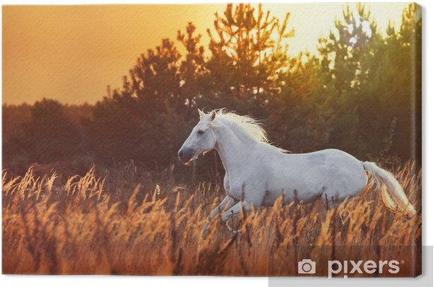 white horse run Canvas Print - Animals